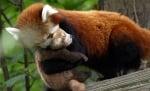 Майка прегръща малкото си