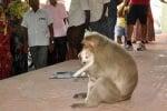 Кученце и маймуна в Индия
