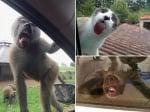 Маймуна, куче, котка