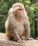 Хванаха мистериозна маймуна във Флорида