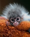 Маймунка бебе