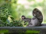 Маймунка с майка си