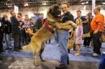 Мъж и куче на изложба