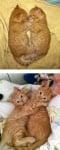 Малки оранжеви котенца