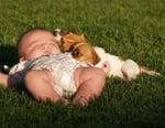 Малко бебе с джак ръсел териери
