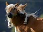 Малко конче прегръща майка си