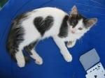 Малко коте сърце