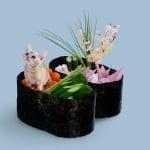 Малко коте върху суши вместо риба