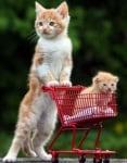 Малко котенце в количка
