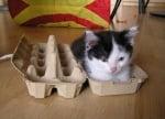 Малко котенце в кутия от яйца