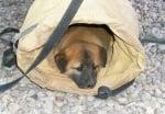 Малко куче в раница