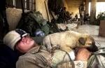 Малко кученце спи с войник