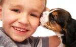 Малко момченце с малък бийгъл, кученце за домашен любимец
