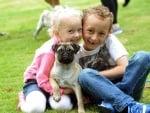 Малко мопсче с деца на феста на набръчканите кучета