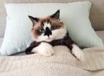 Малкото-коте-алберт