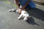 Малтретиране на бездомни котки
