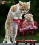 Мама и бебе на разходка