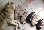 """Мама каза """"Лека нощ!"""""""