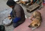 Манао и неговото куче