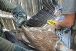 Маркиране на птица