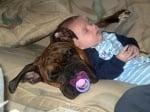 Мастиф куче с бебе