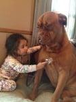 Мастиф с малко момиченце