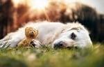 Мече и куче си лежат на полянка