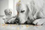 Мече и куче