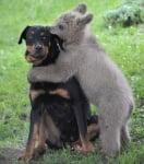 Мече прегръща куче