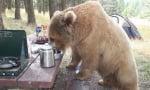 Мечка гризли яде на масата