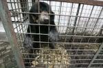 Мечка в зоопарк в Индонезия