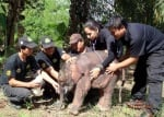 Медици лекуват слонче