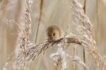 Мишка в полето