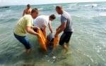 Младежи спасиха живота на заблудило се делфинче в Равда