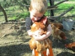 Момченце прегръща оранжева кокошка