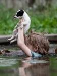 Момченце с кученце