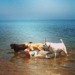 Момиче с кучета
