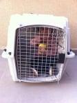Момиченце в клетка за животни