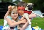 Мопс на фестивала на набръчканите породи кучета
