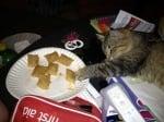 Мързелива котка