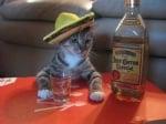 """""""Ще си пийна едно за отскок"""""""