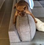 На облегалката на дивана