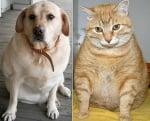 Наднормено тегло при домашния любимец