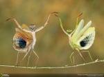 Най - добрите снимки на дивата природа от National Geographic за 2014 година