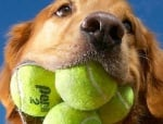 Най-много тенис топки