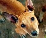 Намалели са сигналите срещу улични кучета в София, а осиновяванията се увеличават