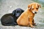 Нови случаи на натровени животни, този път във Варна