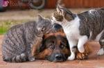 """""""Не ги разбирам тези котки - само се целуват!"""""""