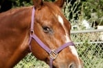 Нехуманно отношение към коне в Костинброд