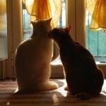 Нежни котки